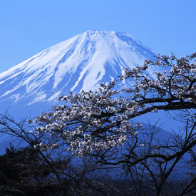 Kursy języka japońskiego – Nasi lektorzy